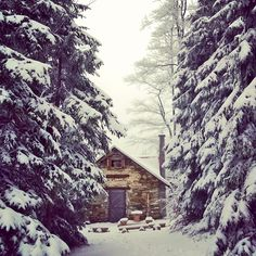 Cabin in Jeseniky mountain woods. And not only this one!