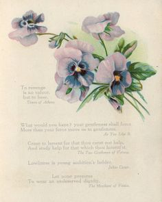 Purple pansies, from Shakespeare book c.1909.