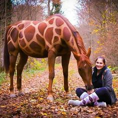 Who wants this style too? Cute Horses, Pretty Horses, Horse Love, Horse Halloween Costumes, Pet Costumes, Most Beautiful Animals, Beautiful Horses, Horse Braiding, Horse Clipping