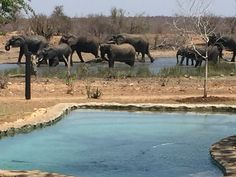 Out Of Africa, Big 5, South Africa, Safari, Elephant, World, Animals, The World, Animales