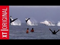 Surfing With Whales - Teahupoo Session