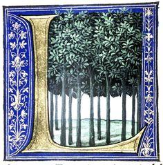 Douce Pliny - Florentine Venice 1476