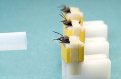 Snuffelbijen. Honingbijen kan je trainen. En dan sporen ze voor jou explosieven,  drugs of gas op. En het beste van alles: je kan het ze leren in een tiental minuten! Een snuffelhond doet er maanden over. De bijen worden geleerd dat ze bij een bepaalde geur voedsel krijgen. Na enkele keren steken ze bij het ruiken van die ene geur vrijwel direct hun tong uit. Via een cameraatje kan de reactie van een reeks bijen worden gemeten en kan je checken of in die verdachte tas wel degelijk drugs…