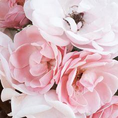 Summer Vibes, Your Favorite, Favorite Recipes, Rose, Simple, Flowers, Plants, Instagram, Pink
