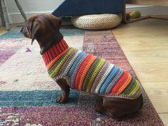 Dachshund Sweater, Funny Dachshund, Mini Dachshund, Daschund, Dog Sweaters, Dachshunds, Crochet Jumpers, Dog Crochet, Crochet Dog Sweater