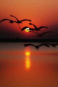 Dawn flight by Andy 58