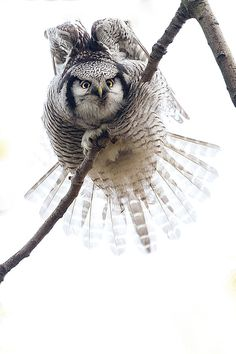 The Look....Owl!