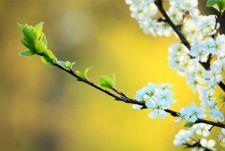 Alle aktuellen Termine zum Thema Frühlingsanfang gibt es hier! Der astronomische Frühlingsanfang bezeichnet den Anfang der Jahreszeit Frühling. Auf der Nordhalbkugel wird er durch die ...