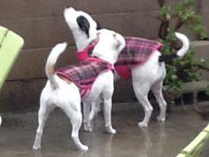It's raining, it's pouring! Lol