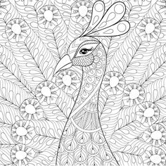 Descargar - Peacock with feathers in zentangle style. Freehand sketch for ad — Ilustración de stock #124627296
