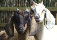 Interact with the friendly farm animals at Wild Earth Nature park next to Anatoki Salmon Farm