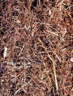 Katalog wydany w związku z wystawą / the catalouge has been published in connection with the exhibition: Mirosław Bałka, bes-sennosh-ch // Galeria Labirynt, 2012