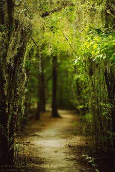 """va103: """"Louisiana forest """""""