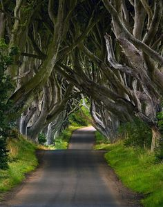Naturally spooky, these are the beech trees forming what is known as  The Dark Hedges in Northern Ireland.