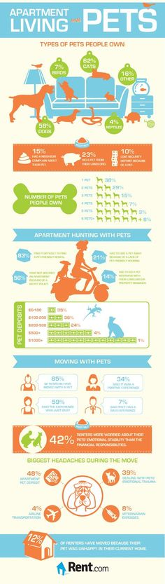 Apartment Living With Pets -- Tips to Help Reduce Stress During a Move | Living In An Apartment