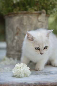 Kitty with flower