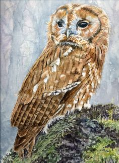 Gallery of Paintings and Cards - SylviaTwiss Raptor Bird Of Prey, Vintage Owl, Watercolor Artists, Wildlife Art, Felt Art, Art Studios, Pet Portraits, Art For Kids, Art Drawings