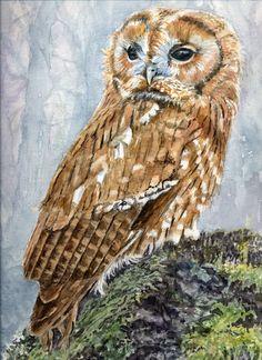 Tawny Owl.. A  watercolour by Sylvia Twissl
