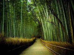 En uno de los distritos de Kioto (Japón), en Arashimaya, el espectáculo visual y sonoro llega a ser impactante.