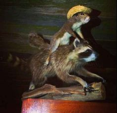 The 21 Stages Of Your Office Christmas Party, As Told By Crap Taxidermy