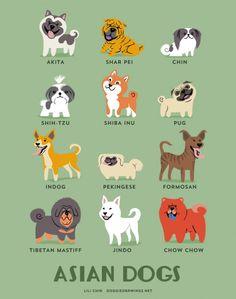 Akita inu (Japão), Shar-pei (China), Chin ou Spaniel Japonês (Japão), Shih-tzu (China), Shiba inu (Japão), Pug (China), Indog ou Indian Pariah Dog (Índia), Pequinês (China), Formosan (Taiwan), Mastim tibetano (Tibete), Jindo coreano (Coreia do Sul) e Chow-chow (Mongália) são raças ASIÁTICAS