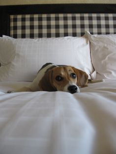 "thats a ""i know i shouldn't be on the bed but i'm so cute your going to let me stay"" look ;)"