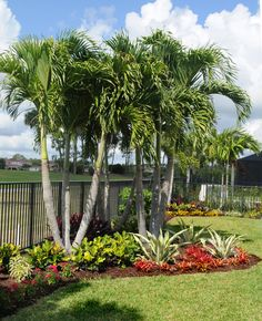 Tropical landscape in Jupiter Country Club, Jupiter, FL by Pamela Crawford. See over 2000 photos of Palm Beach landscapes and container gardens suitable for south Florida on her web site, pamela-crawford.com. Pamela designs and installs landscapes throughout Palm Beach County, FL, including Boca Raton, Delray Beach, the town of Palm Beach, Palm Beach Gardens, Jupiter, and Wellington.