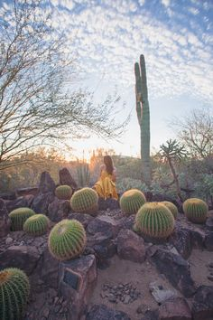 Planning your trip to Phoenix, Arizona? Then you need to check out this list of the top ten things to do in Phoenix. Pack your bags and head to the American Southwest for some sun and fun!  #travelguide #phoenix #Roadtrip #travelblog #arizona
