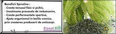 Beneficii Spirulina : - Creste tonusul fizic si psihic, - Incetineste procesele de imbatranire, - Creste performantele sportive, - Ajuta organismul in bolile cronice, prin cresterea producerii de anticorpi. Spirulina, Cactus Plants, Cacti, Cactus
