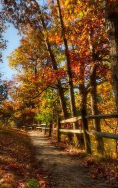 A Path by the Fence in Autumn ....