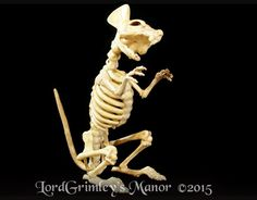 "Skeleton Rat Price: $24.99 The Master's pets have been rising from the pet cemetery and now roam the grounds.  Please help the Goons find good homes for these beloved pets.  Bonez Skeleton Rat is a full size rat skeleton made of think plastic making it suitable for indoor and outdoor use.  Bonez Skeleton Rat has a pose-able tail. his mouth can be opened and his head can swivel from side to side.  He measures  12"" Tall x 12"" Long  x 6"" Wide.Questions ? Contact us at order@lordgrimley.com"