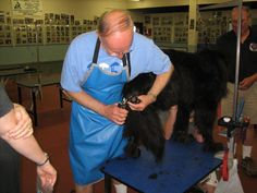Newfoundland Dogs, Dog Grooming, Dog Treats, Regional, Dog Cat, Photo Galleries, Club, Country, Pets