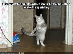 funny-pictures-your-cat-is-tapdancing-and-you-are-drunk.jpg (500×375)
