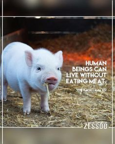 cute pet pigs names Peppa Pig, Cute Baby Animals, Farm Animals, Dachshund, Bastet, Pig Images, Free Images, Pigs Eating, Factory Farming
