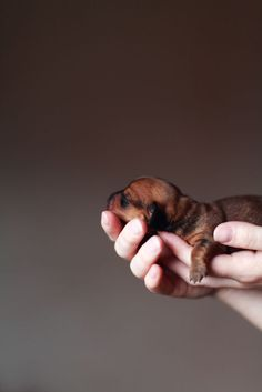handful of love