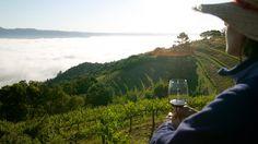Napa Valley Dream-Tr