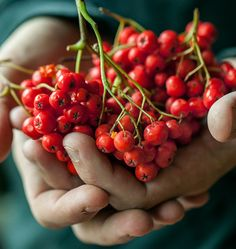 Rowan berries make a delicious preserve, worth making. Honey Recipes, Cheese Cloth, Rowan, Fruits And Vegetables, Preserves, Jelly, Herbalism, Eat, Cooking