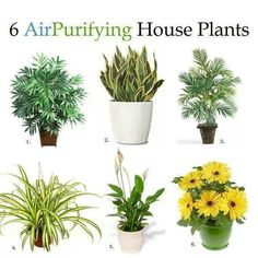 6 Air Purifying House Plants 1. Bamboo Palm Tree 2. Snake Plant 3. Areca Palm Tree 4. Spider Plant 5. Lily of Peace 6. Gerbera Daisy