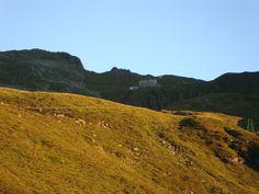 1 Mountains, Nature, Travel, Northern Goshawk, Naturaleza, Viajes, Destinations, Traveling, Trips
