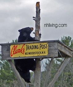 Clarks Trading Post in Lincoln NH (White Mountains) is perhaps best known for its live trained bear show! Lots of fun visits as a child.