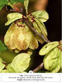 Manual Flores Bach: ALBUM FOTOS FLORES BACH Bach Flowers, Plants, Color, Healing, Medicinal Plants, Colour, Plant, Planets, Colors