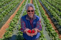 The other week I got invited by CA Strawberries to take a tour of Ramos Farms in Watsonville, CA. Miguel Ramos (the owner of Ramos Farms) and 'California Strawberries' blew my mind with all sorts of information about strawberries. From growing, to.