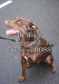 My dog is handicapped...yet she is so BOSS