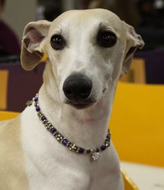 bejeweled Whippet by mindync, via Flickr