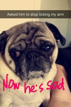 Now he's sad. (stinkywrinkles)