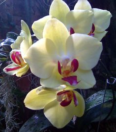 Salon: in-depth news, politics, business, technology & culture Orchid House, Orchids, Politics, Culture, Entertaining, Flowers, Plants, Flora, Political Books