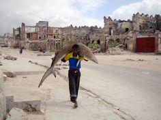 PARADOXALEMENT, SUR L'iMAGE, le prédateur des mers, pourtant mort, semble en pleine forme. Plus que son porteur, bien plus que le paysage qui les entoure.   La photo a été prise à Mogadiscio par Feisal Omar pour l'agence d'informations Reuters. Elle a rempo  rté le 1er Prix World Press, (un truc énorme dans la profession).   Pour vous dire à quel point il est normal, dans ce pays de pêcheurs, de se balader avec un requin sur le dos.