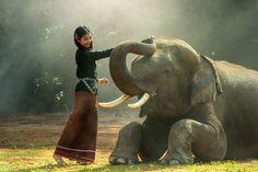 Elefante, Tailândia www.calçathai.com