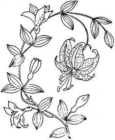1886 Ingalls Lily Sprig | Flickr - Photo Sharing!
