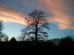 View from back garden